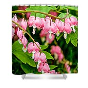 Bleeding Hearts In Bloom Shower Curtain