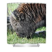 Blessed Bull Shower Curtain
