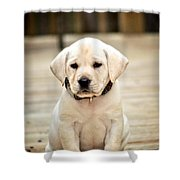 Blond Lab Pup Shower Curtain
