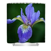 Blood Iris Shower Curtain