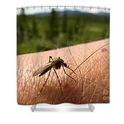 Blood Thirsty Mosquito On Human Arm Shower Curtain
