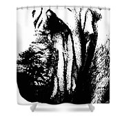Bloodhound - It's Black And White - By Sharon Cummings Shower Curtain