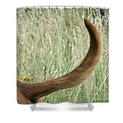 Bloodhound Tail Shower Curtain
