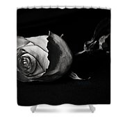 Bloodless Rose Shower Curtain