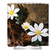 Bloodroot Beauty Shower Curtain
