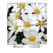Bloodroot Blooms Shower Curtain