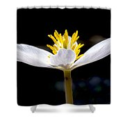 Bloodroot Shower Curtain by Steven Ralser