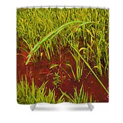 Bloody Battle Of New Orleans 3 Shower Curtain