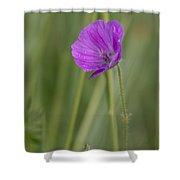 Bloody Cranesbill Flower Shower Curtain