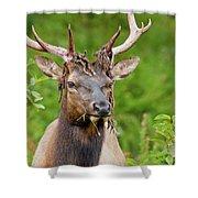 Bloody Elk Shower Curtain