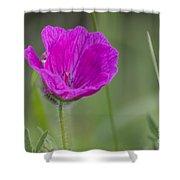 Bloody Geranium Dew Shower Curtain