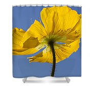 Bloom Time Shower Curtain by Heidi Smith