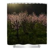 Blooming Almond Trees Shower Curtain