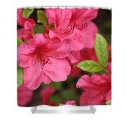 Blooming Azalea Shower Curtain