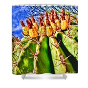 Blooming Barrel Cactus By Diana Sainz Shower Curtain