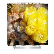 Blooming Barrel Cactus Shower Curtain