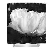 Blooming Cactus 2 Shower Curtain