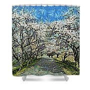 Blooming Cherry Tree Avenue Shower Curtain