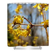 Blooming Forsythia Shower Curtain