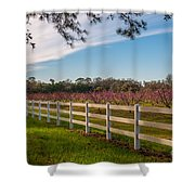 Blooming Peach Tree's At Boone Hall Shower Curtain