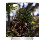 Blooming Pinecone Shower Curtain