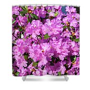 Blooming Pink Azaleas Shower Curtain