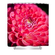 Blooming Red Flower Shower Curtain by John Wadleigh