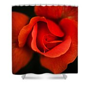 Blooming Red Rose Shower Curtain