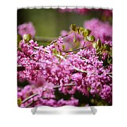 Blooming Redbud Tree Cercis Canadensis Shower Curtain