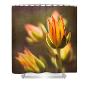 Blooming Succulents V Shower Curtain