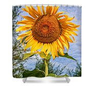 Blooming Sunflower V2 Shower Curtain by Adrian Evans
