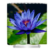 Blooming Water Lily Shower Curtain