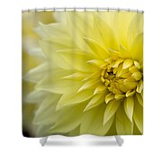 Blooming Yellow Petals Shower Curtain