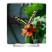 Blooms And Butterfly1 Shower Curtain