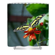 Blooms And Butterfly2 Shower Curtain