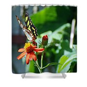 Blooms And Butterfly4 Shower Curtain