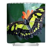 Blooms And Butterfly5c Shower Curtain