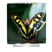 Blooms And Butterfly6c Shower Curtain