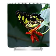 Blooms And Butterfly7c Shower Curtain