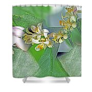 Blooms Of Lemon Tree Shower Curtain