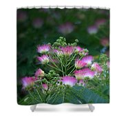 Blooms Of The Mimosa Tree Shower Curtain