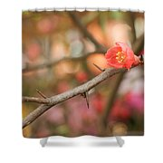 Blossom Amidst The Thorns Shower Curtain