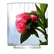 Blossom Bottom Shower Curtain