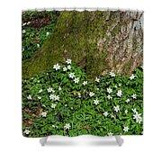 Blossom Windflowers Shower Curtain