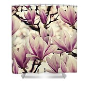 Blossoming Of Magnolia Flowers In Spring Time Shower Curtain