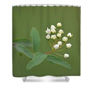 Blossoming Spirea Buds Shower Curtain