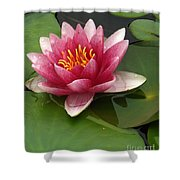 Blossoming Waterlily Shower Curtain