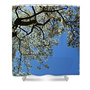 Blossoming White Magnolia Tree Against Blue Sky Shower Curtain