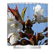 Blossoms 2 Shower Curtain