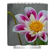 Blossoms Abound Shower Curtain